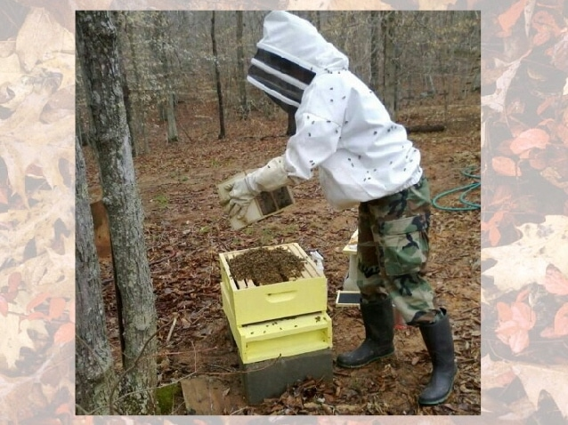 Honey Bees: Videos